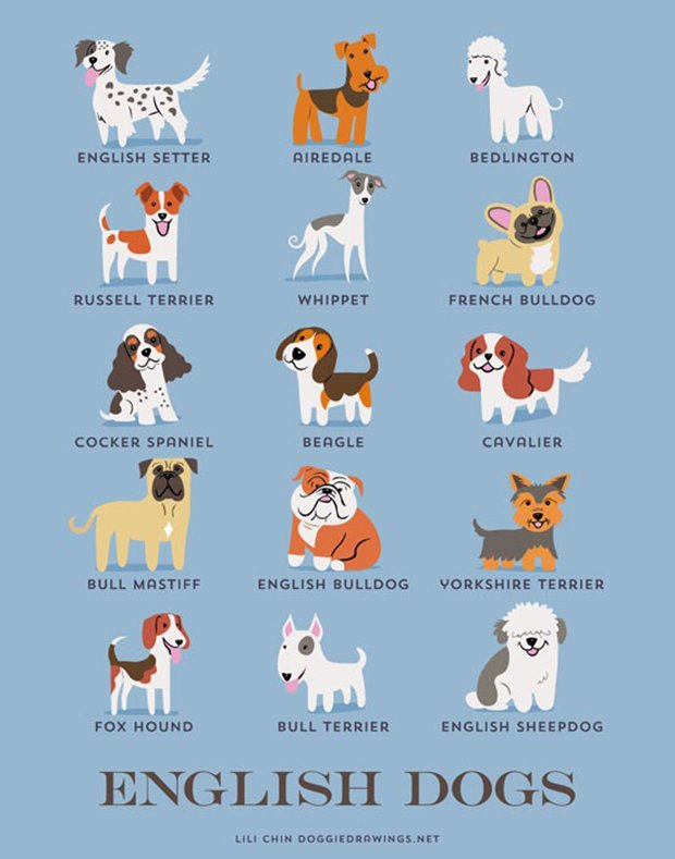 Cachorros do mundo (7)