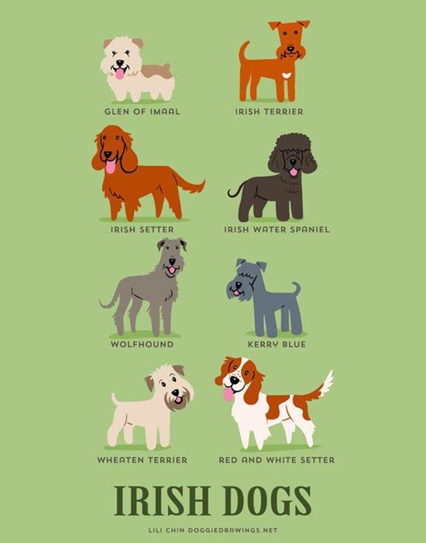Cachorros do mundo (9)
