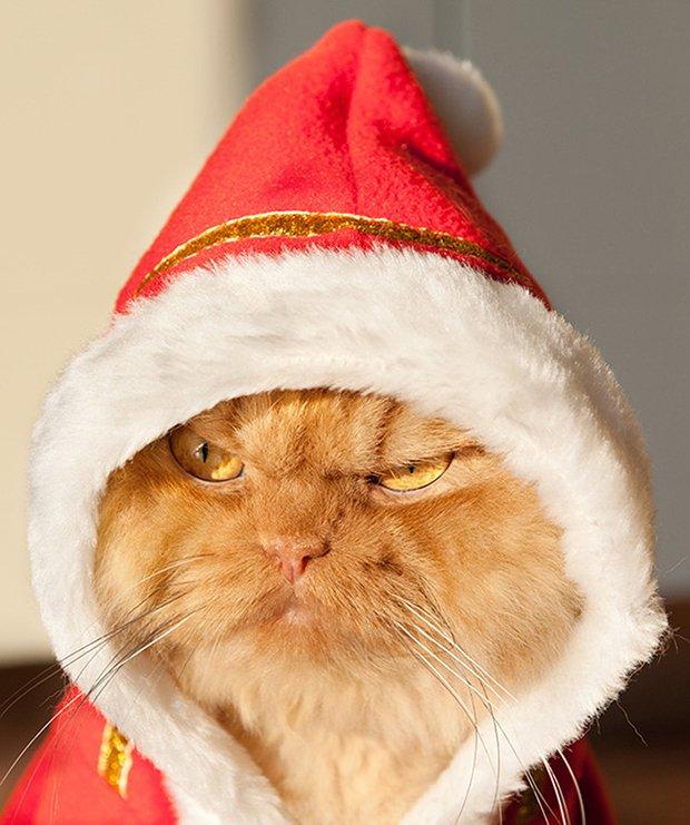 Garfi o gato mais mau humado de todos (1)
