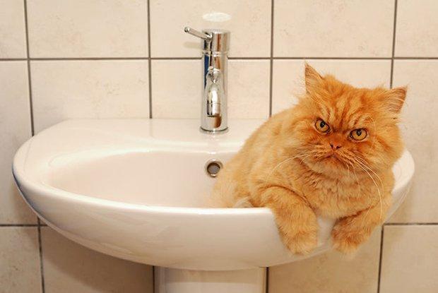 Garfi o gato mais mau humado de todos (11)