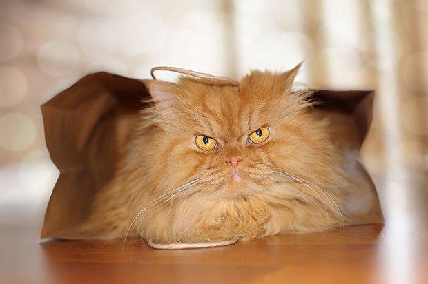 Garfi o gato mais mau humado de todos (12)