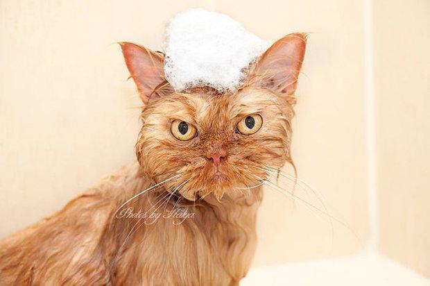 Garfi o gato mais mau humado de todos (13)