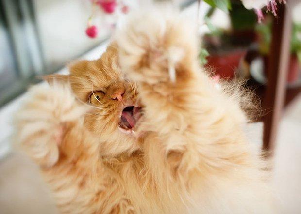 Garfi o gato mais mau humado de todos (16)