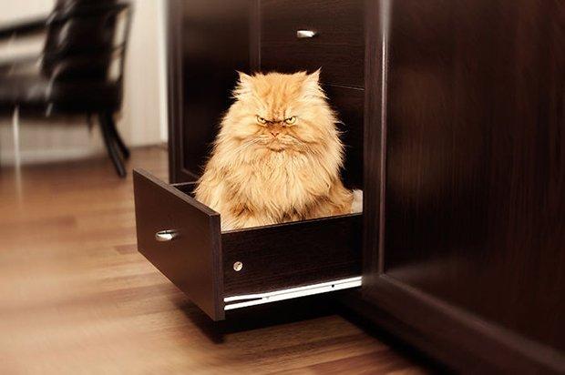 Garfi o gato mais mau humado de todos (3)
