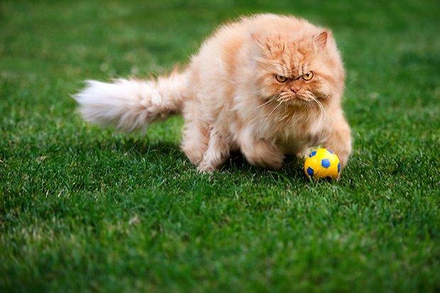 Garfi o gato mais mau humado de todos (5)