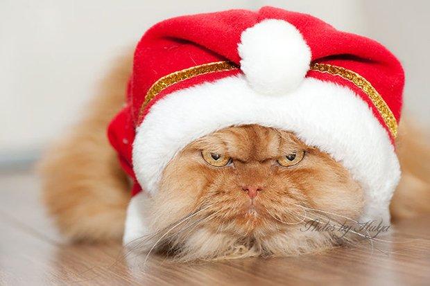 Garfi o gato mais mau humado de todos (6)