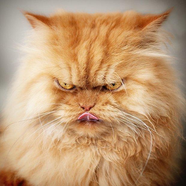 Garfi o gato mais mau humado de todos (7)