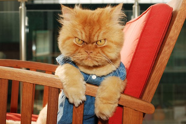 Garfi o gato mais mau humado de todos (8)
