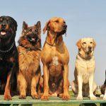 tipos diferentes de cachorros