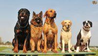Cachorros do mundo