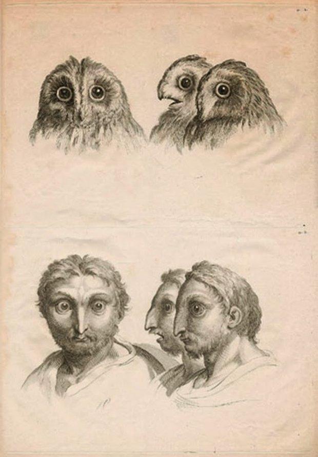 E se o homem tivesse evoluido atraves de outros animais (1)