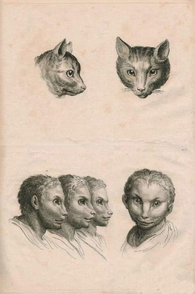 E se o homem tivesse evoluido atraves de outros animais (2)