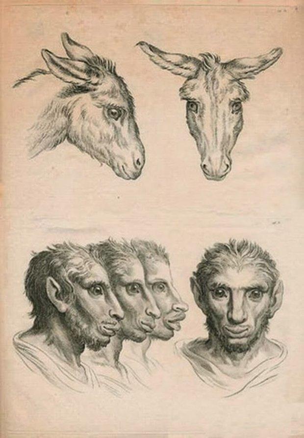 E se o homem tivesse evoluido atraves de outros animais (6)