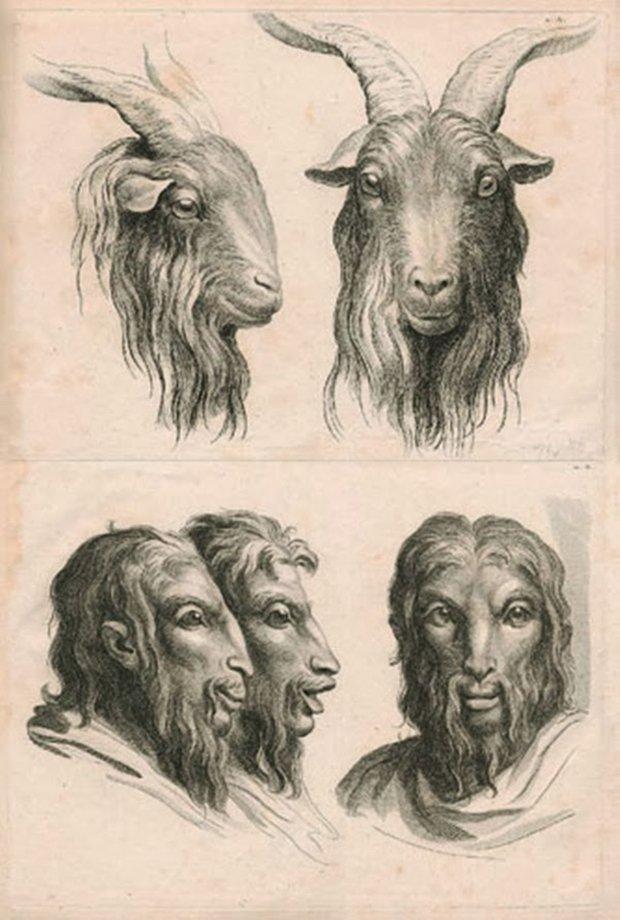 E se o homem tivesse evoluido atraves de outros animais (8)