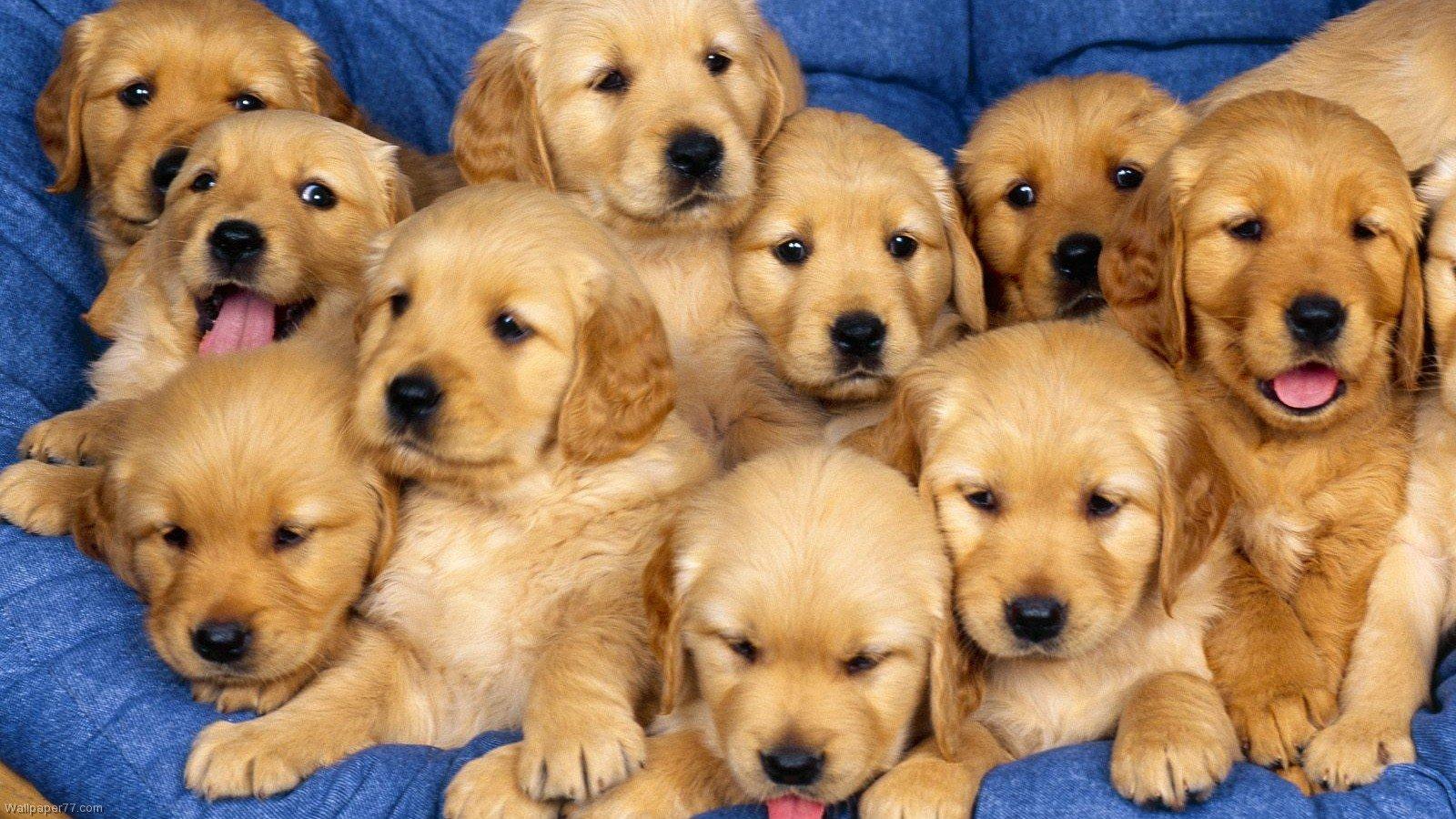 Perguntas idiotas que as pessoas fazem para os cachorros