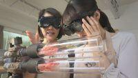 Como empanar camarões de forma hétero