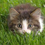 Decifrando o comportamentos dos gatos