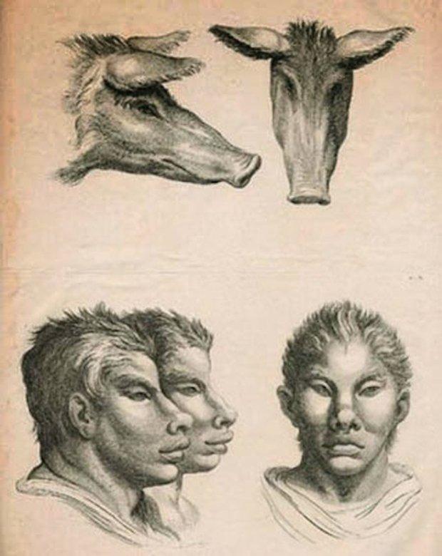 E se o homem tivesse evoluido atraves de outros animais (10)