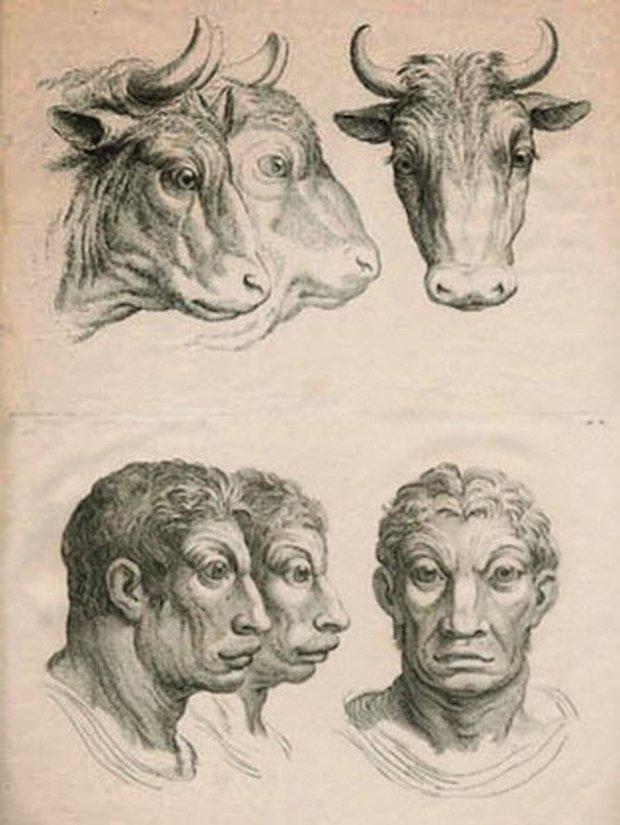 E se o homem tivesse evoluido atraves de outros animais (11)