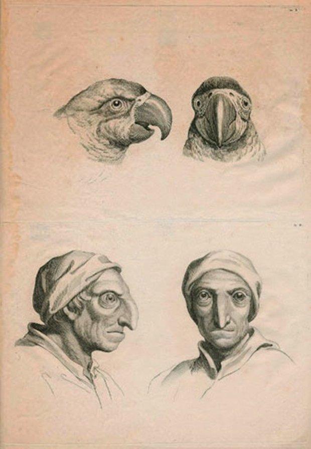 E se o homem tivesse evoluido atraves de outros animais (13)