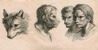 E se o homem tivesse evoluído através de outros animais?