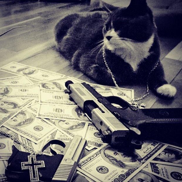 Gatinhos ostentacao (1)