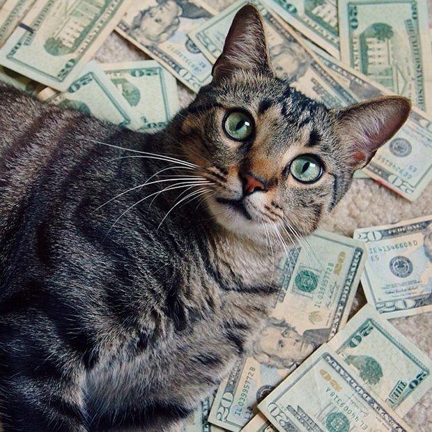 Gatinhos ostentacao (10)