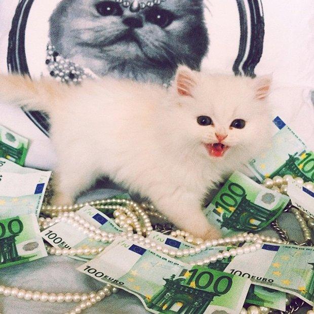 Gatinhos ostentacao (11)