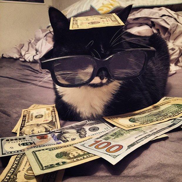 Gatinhos ostentacao (13)