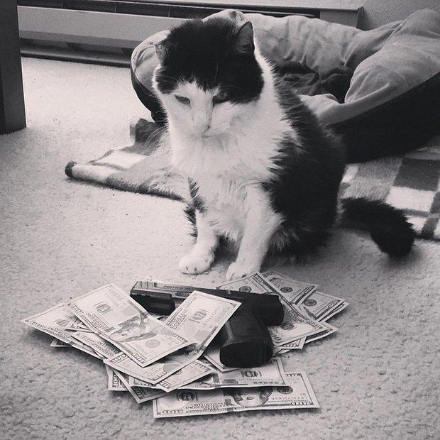 Gatinhos ostentacao (14)