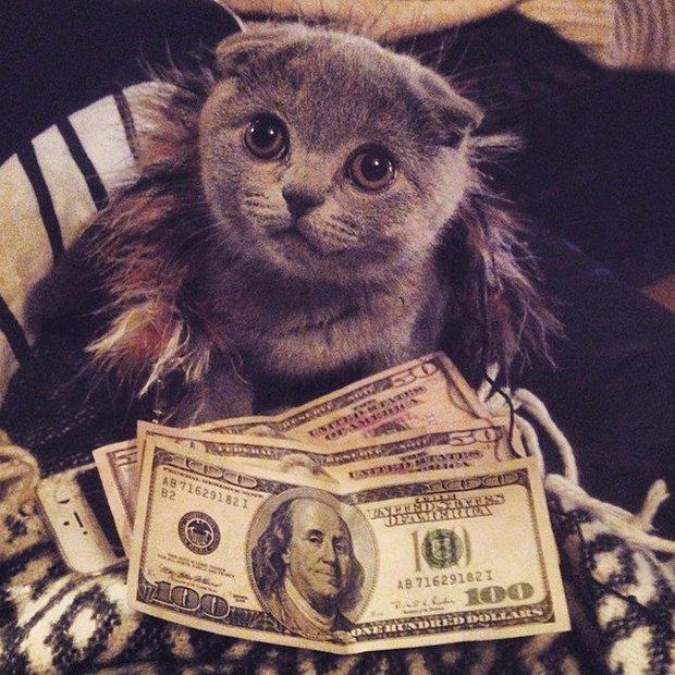 Gatinhos ostentacao (15)