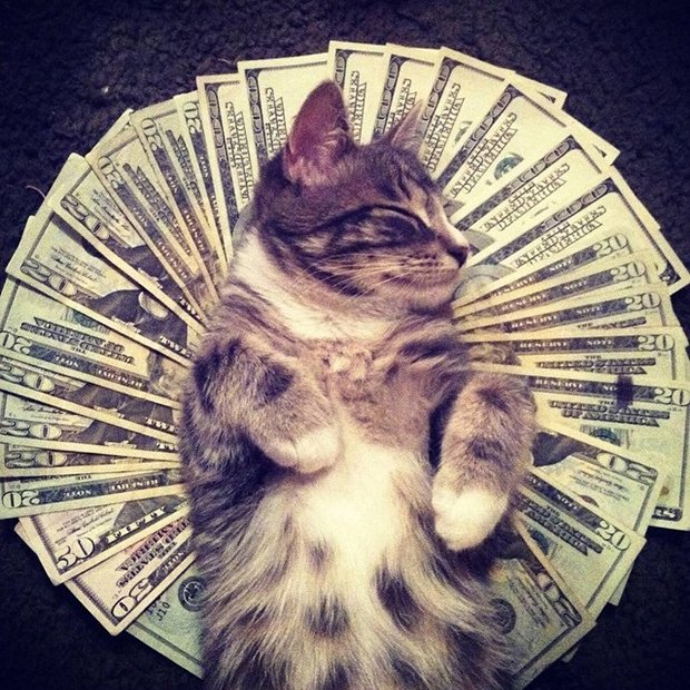 Gatinhos ostentacao (17)