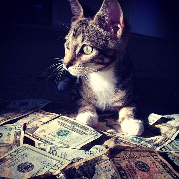 Gatinhos ostentacao (2)