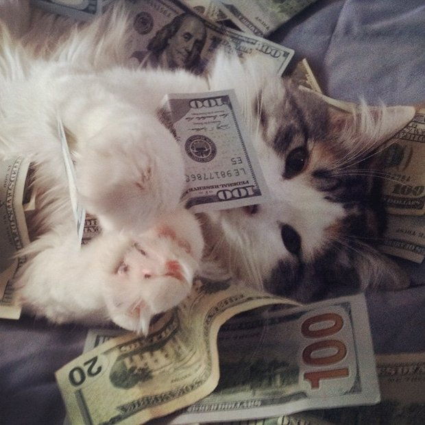 Gatinhos ostentacao (21)