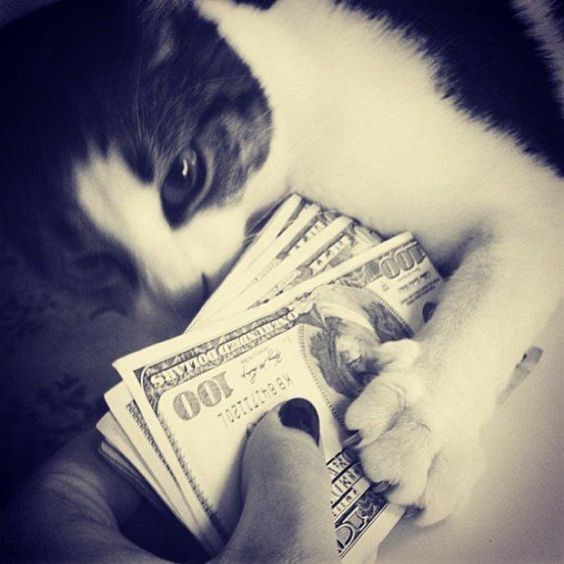 Gatinhos ostentacao (3)
