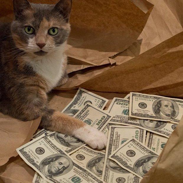 Gatinhos ostentacao (4)