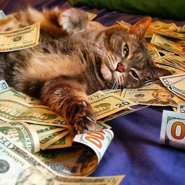Gatinhos ostentacao (5)