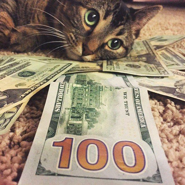 Gatinhos ostentacao (6)