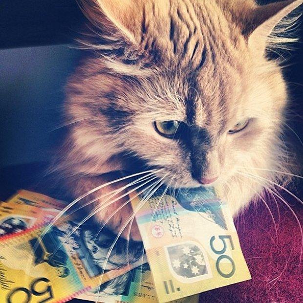 Gatinhos ostentacao (7)