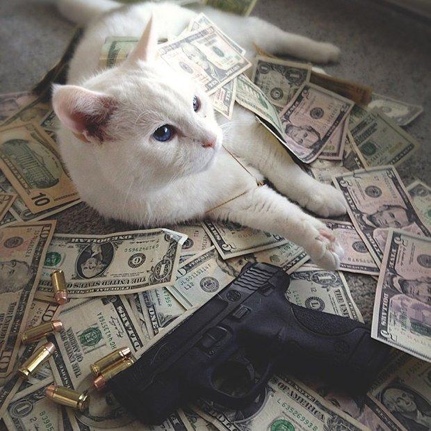 Gatinhos ostentacao (9)