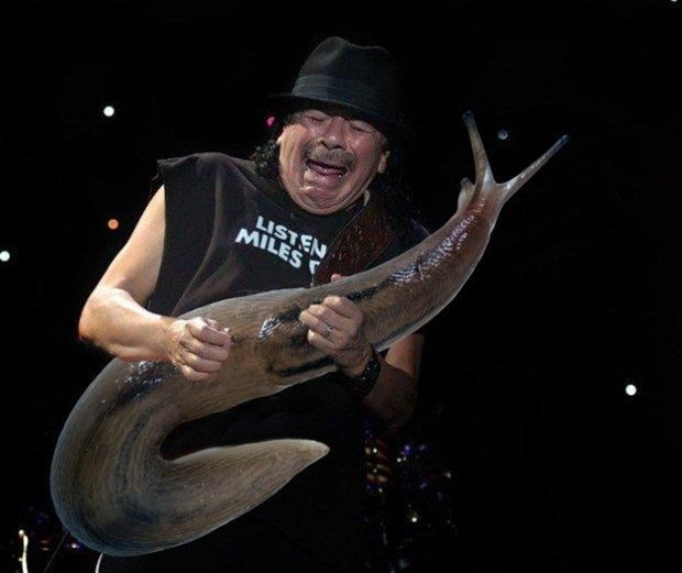 Grandes astros do rock tocando em lesmas gigantes
