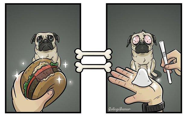O mundo pelo ponto de vista de um cachorro (3)