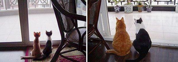 Gatos antes e depois (1)
