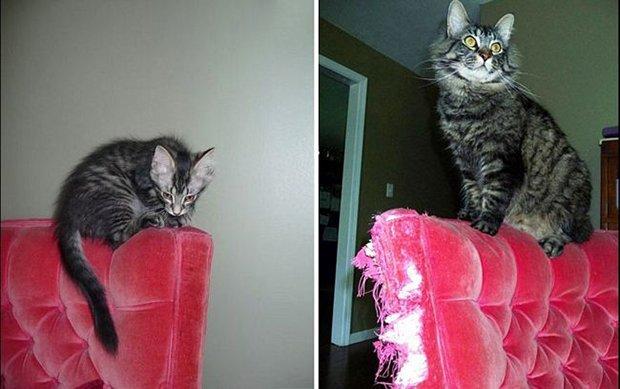 Gatos antes e depois (10)