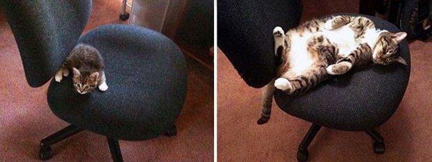 Gatos antes e depois (12)