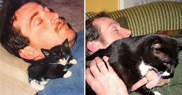 Gatos antes e depois (13)