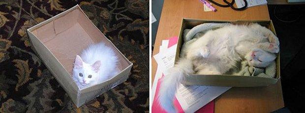 Gatos antes e depois (15)