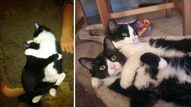 Gatos antes e depois (16)