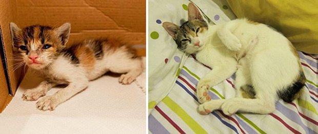 Gatos antes e depois (17)