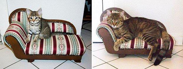 Gatos antes e depois (18)